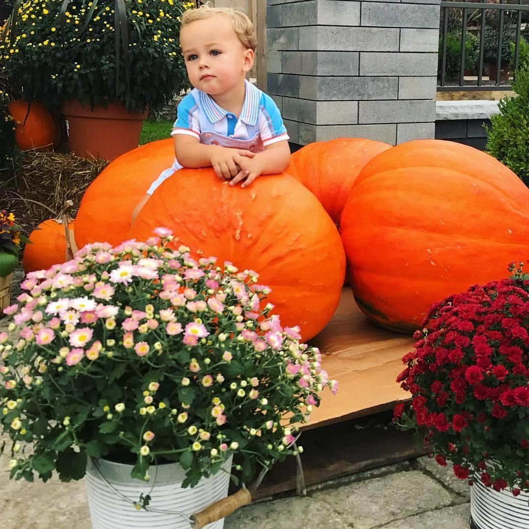 kid with pumpkins