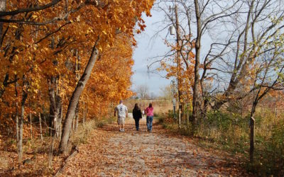Top 5 Things to Do at Ritchey Woods Nature Preserve