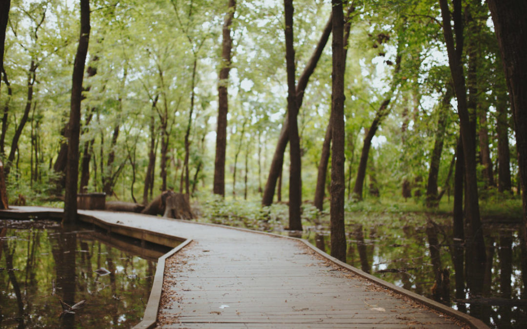 Explore Ritchey Woods for National Take a Hike Day