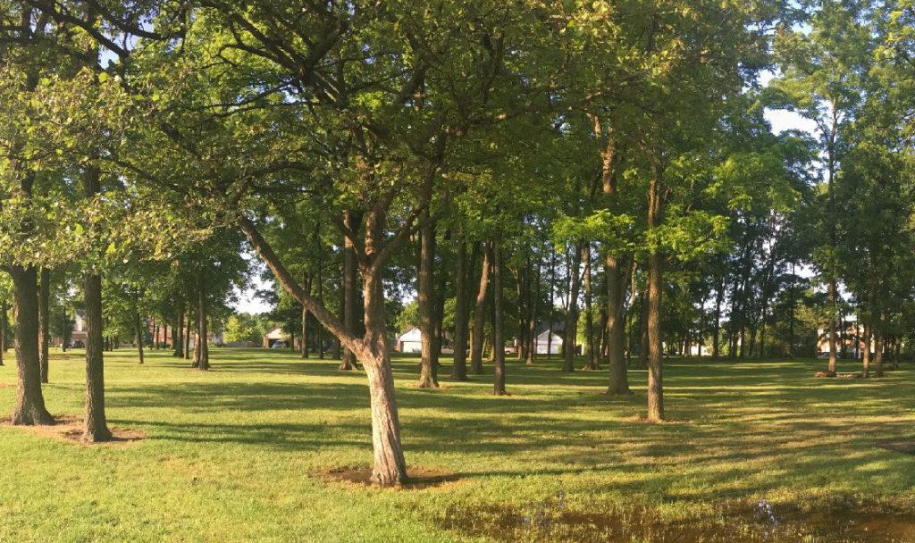 Roy G. Holland Memorial Park