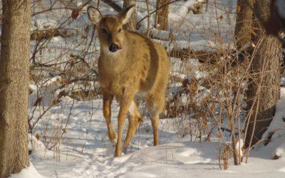Winter Trail Walk: Thinking & Dreaming