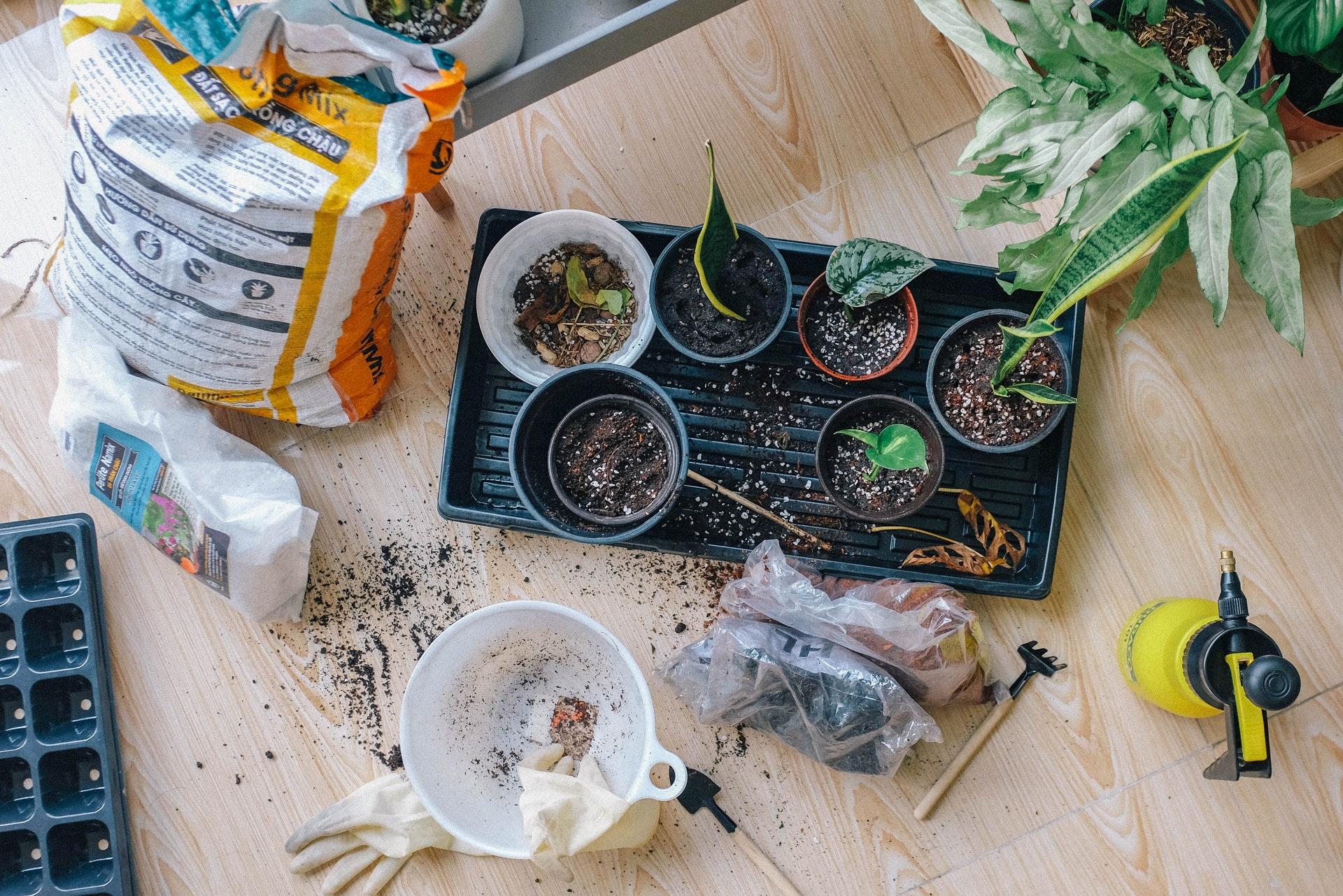 5 Tips For the 2021 Gardening Season