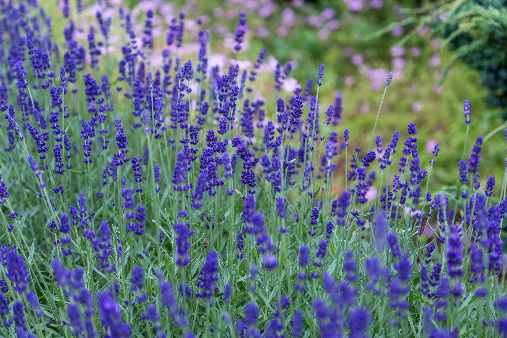 Spring Planting Guide: Best Plants for Indiana