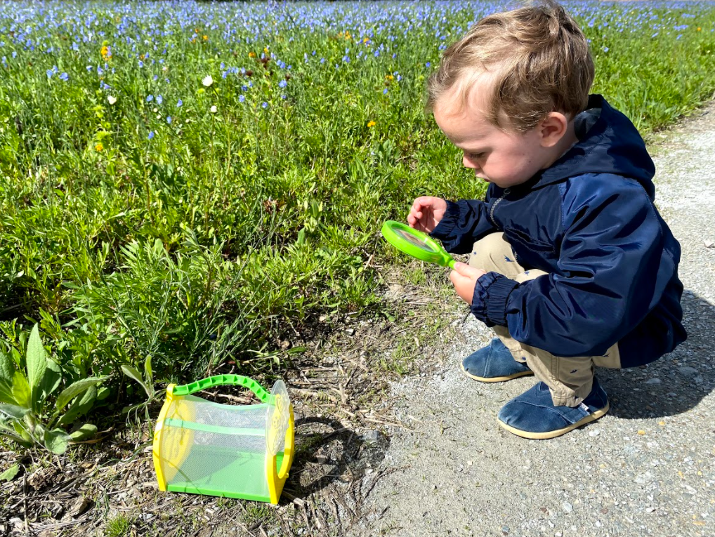 boy looking at bug