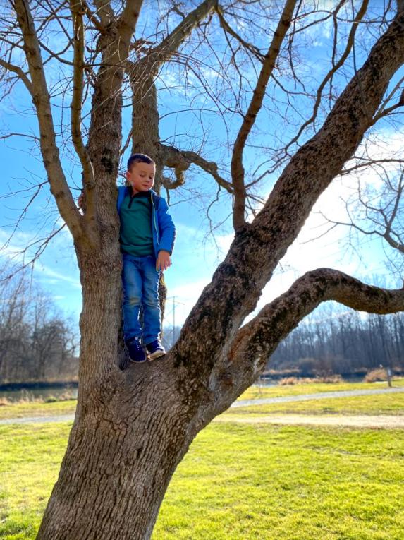 boy climbing tree