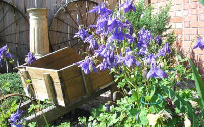 National Garden Week: Advice from Gardening Experts
