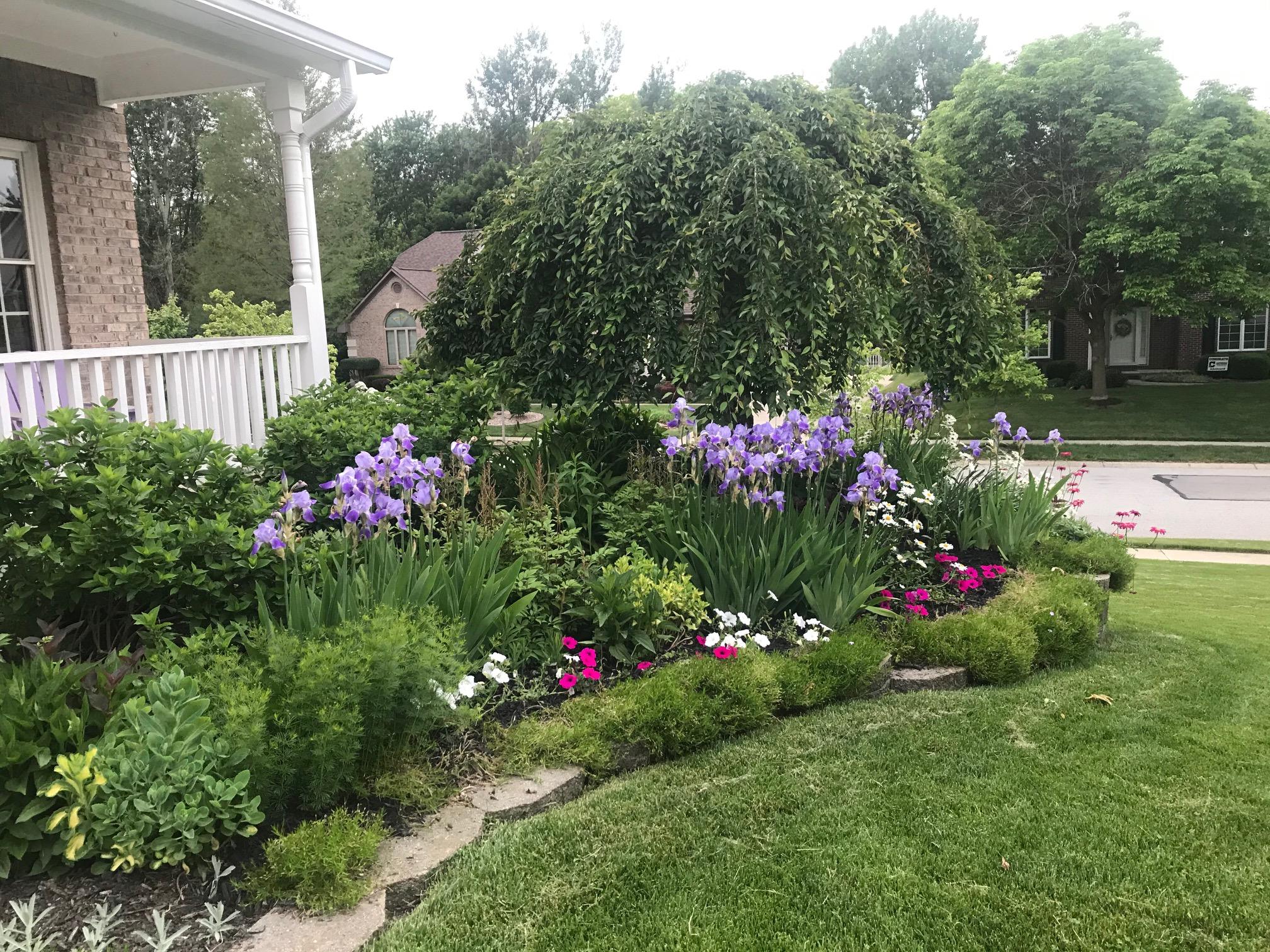 a far away photo of a garden