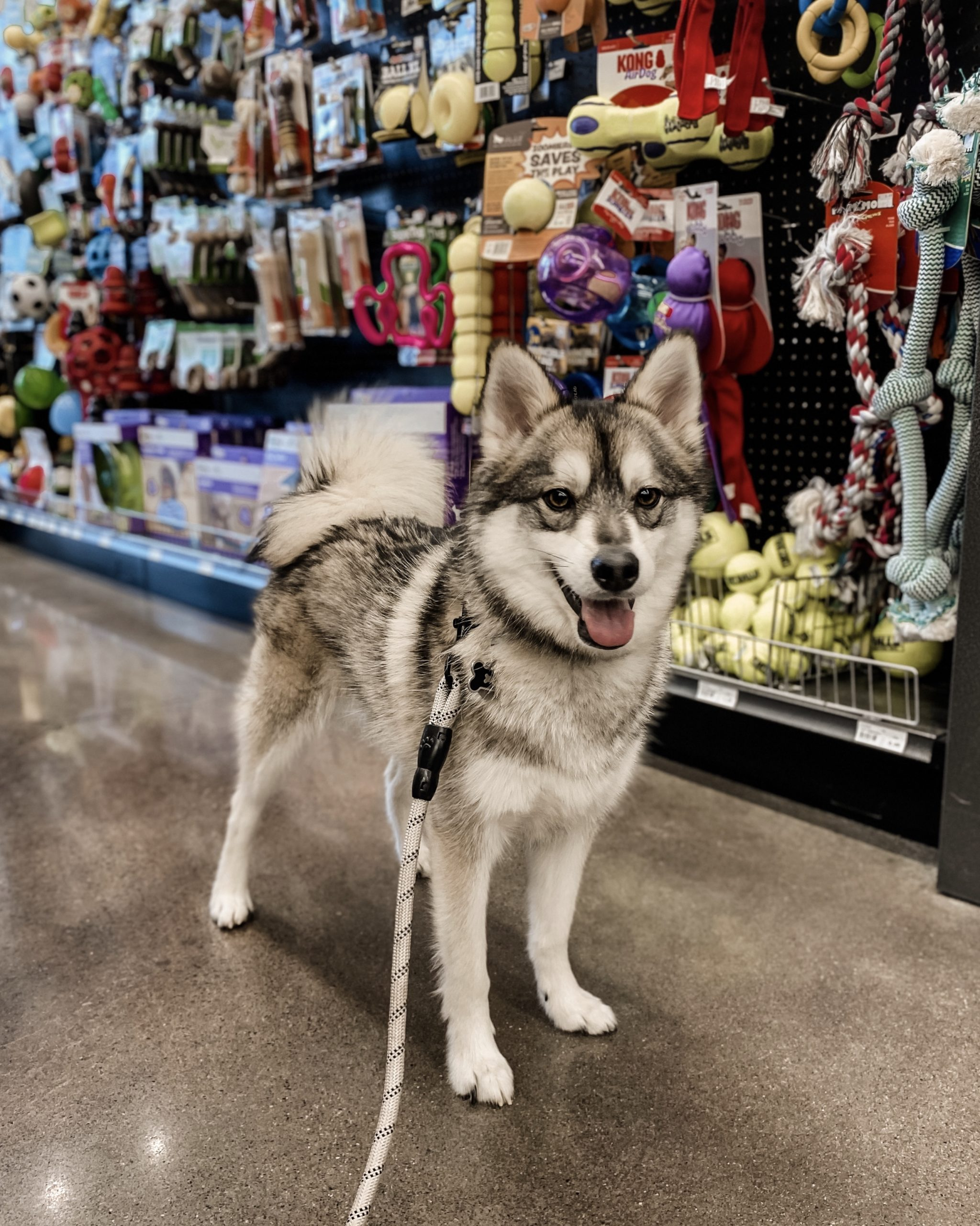 a dog standing in front of a toy aisle