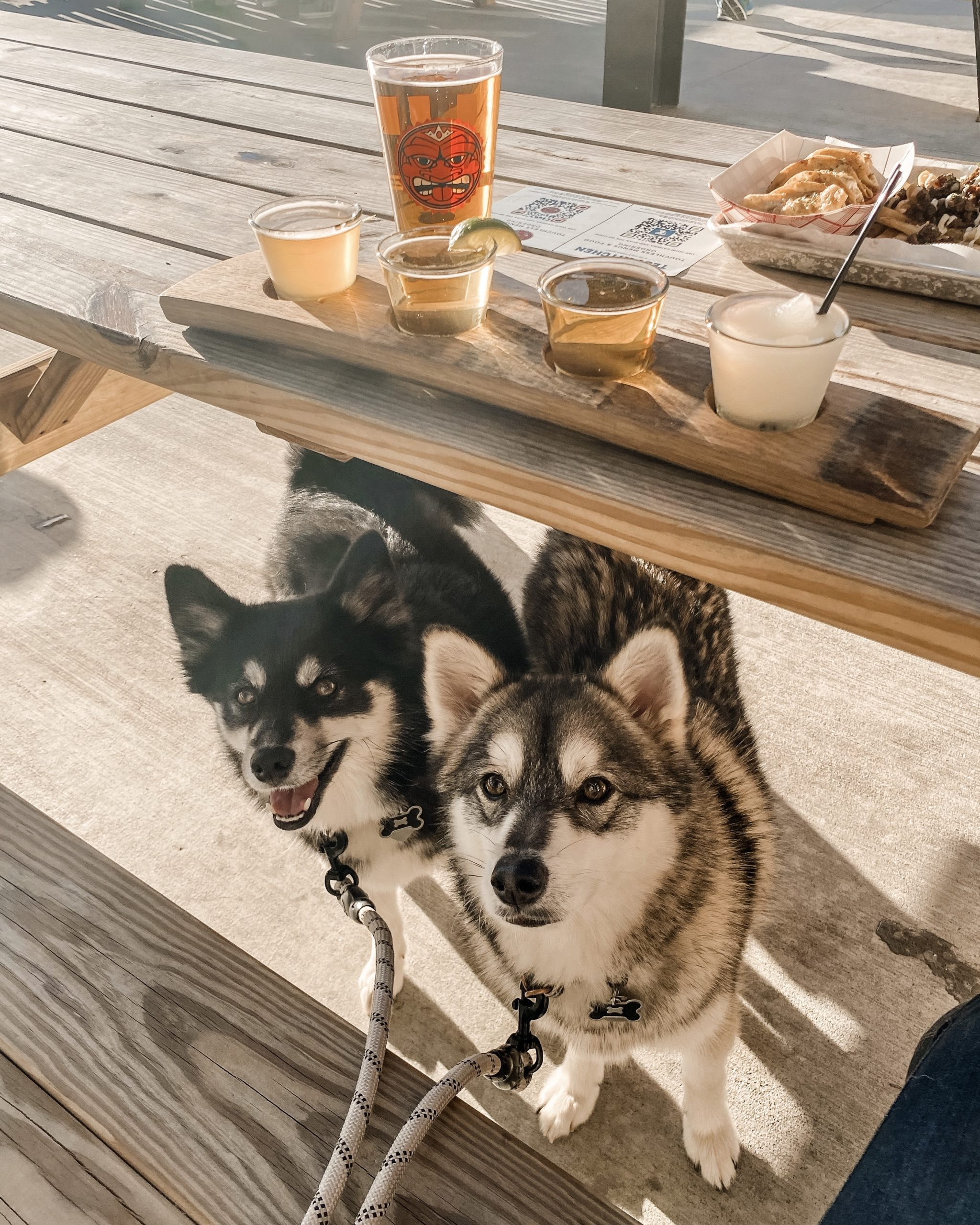 two dogs peeking their heads out from underneath a table