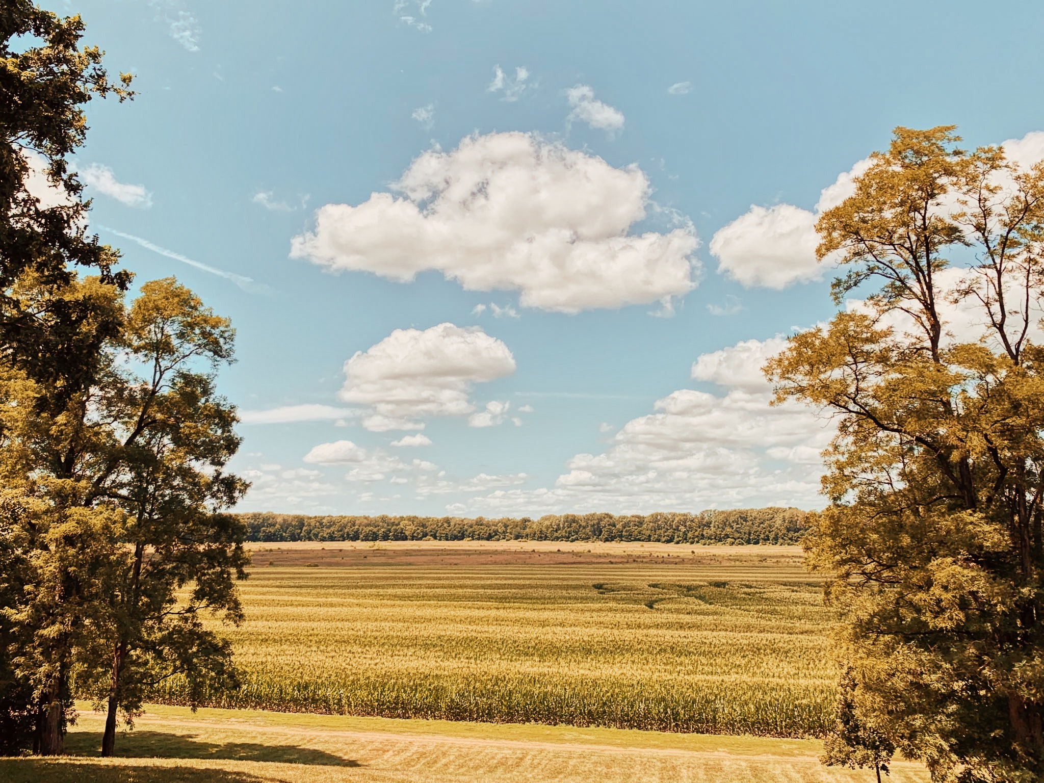 a far away photo of a corn field with trees on the side