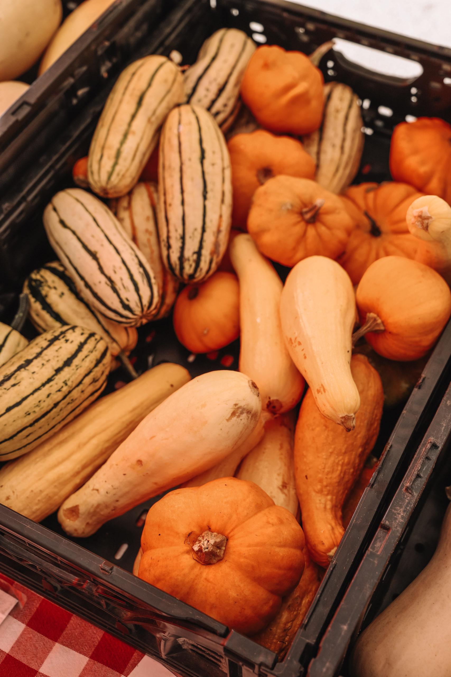 fall vegetables in a bin