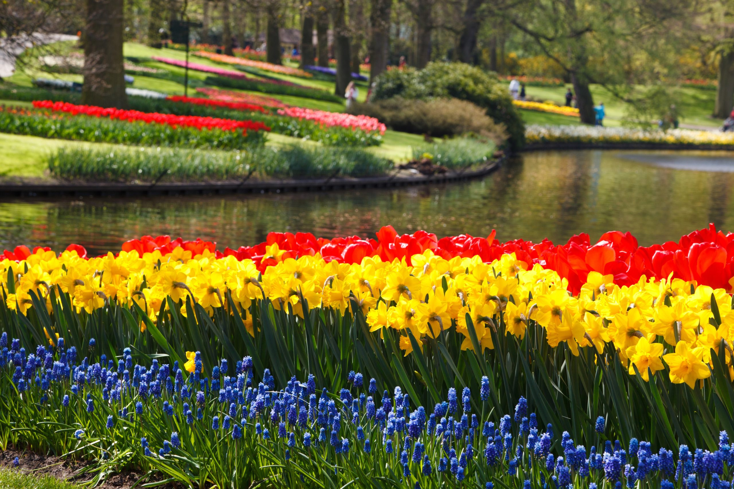 colorful flowers in a large garden